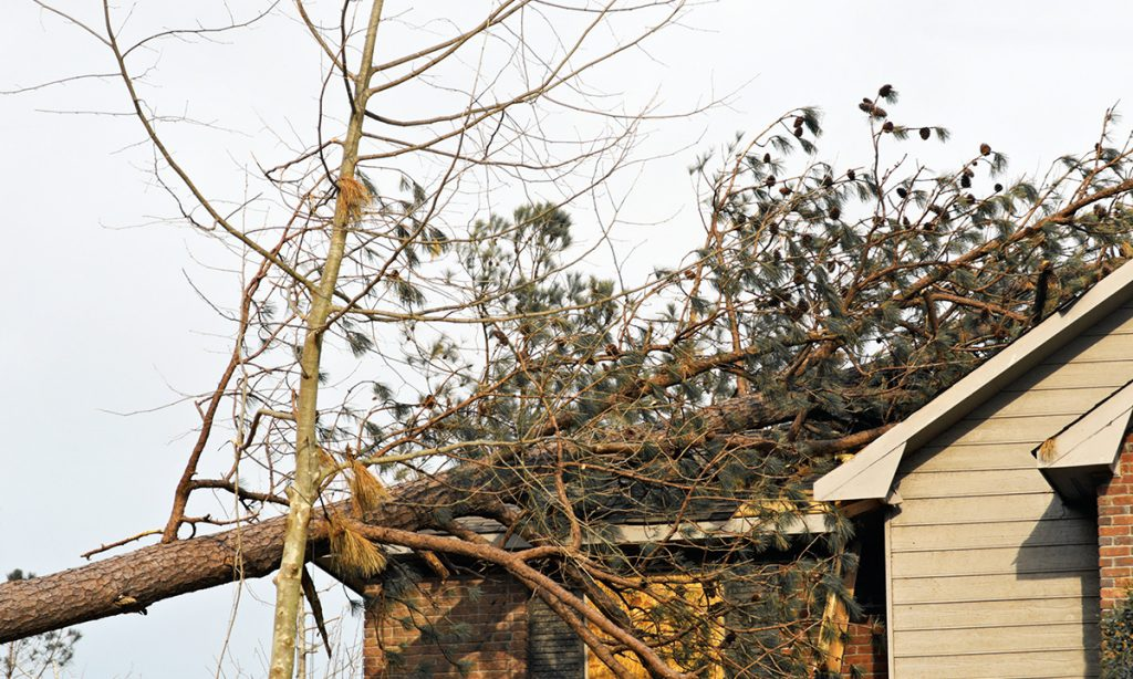 roof damaged by branches